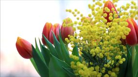 Tulips bouquet with yellow mimosa stock video footage