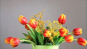 Tulips bouquet with yellow mimosa rotate stock footage
