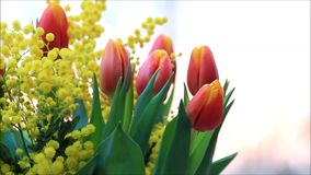 Tulips bouquet with yellow mimosa. Rotate stock footage
