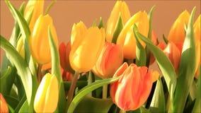 Tulips bouquet yellow orange rotate stock video footage