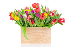 Tulips in the box Royalty Free Stock Photos