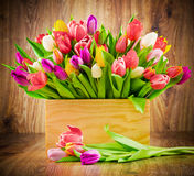 Tulips in the box Royalty Free Stock Image