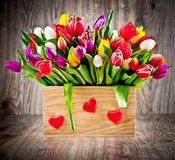 Tulips in the box Stock Image