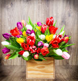 Tulips in the box Stock Photography
