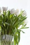 Tulips brancos em um vaso Foto de Stock Royalty Free