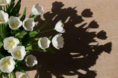 Tulips brancos no sol Fotografia de Stock Royalty Free