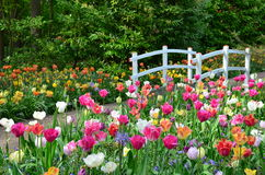 Tulips and a bridge in Keukenhof garden, Netherlands Royalty Free Stock Photography