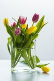 Tulips are bright purples and yellows Stock Photo