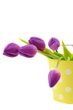 Tulips in a Bucket Stock Image