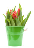 Tulips in bucket Royalty Free Stock Photos