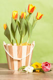 tulips in a bucket Royalty Free Stock Photos