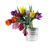 tulips in the bucket isolated Royalty Free Stock Image