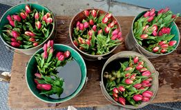 Tulips buckets at Farmers Market stock image