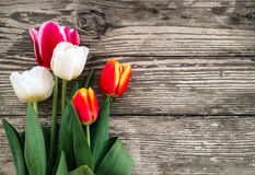 Tulips bunch on dark barn wood planks background Stock Images