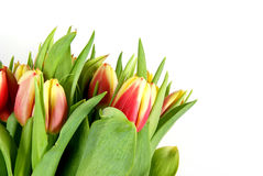 Tulips. Bunch of Tulips isolated on pure white Stock Images