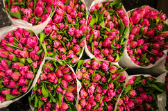 Tulips bunches Royalty Free Stock Photos
