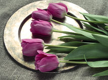 Tulips on a burlap. Copper tray with tulips on a burlap stock images