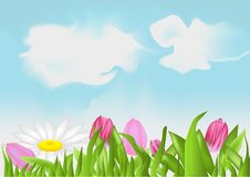 Tulips and camomile Royalty Free Stock Photography