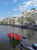Tulips, Canal, Amsterdam Stock Photography