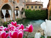 Tulips on canal, Treviso, Italy royalty free stock image