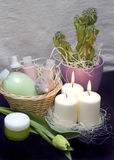 Tulips and candles. A green tulip and three white candles presented as bathroom decoration. Basket with cosmetics and cactus plant Stock Images