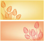 Tulips card background Stock Image