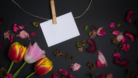 Tulips and card for free text. Tulips and a card for free text in front of black background Royalty Free Stock Image
