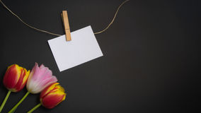 Tulips and card for free text. Tulips and a card for free text in front of black background Royalty Free Stock Photo