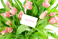 Tulips and a card isolated on white background Stock Photo