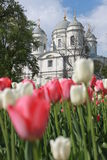 Tulips and the cathedral Stock Photo