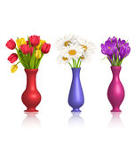 Tulips chamomiles and crocuses in vases with reflection on white Stock Photos