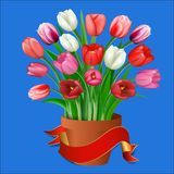 Tulips in a clay pot with ribbon for your text Royalty Free Stock Image