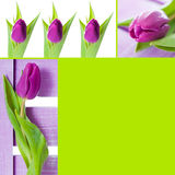Tulips collage Stock Photo