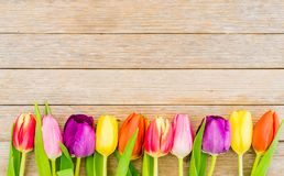 Tulips, colorful spring flowers border on rustic wooden background. Fresh multicolored tulips border on wooden background with copy space stock photos