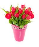 Tulips coloridos vermelhos Fotografia de Stock