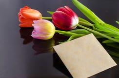 Tulips com cartão Imagem de Stock Royalty Free
