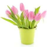 Tulips cor-de-rosa fotos de stock royalty free