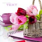 Tulips cor-de-rosa Fotos de Stock