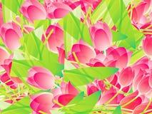 Tulips cor-de-rosa Imagens de Stock Royalty Free
