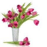 Tulips cor-de-rosa Fotografia de Stock Royalty Free