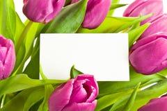 Tulips cor-de-rosa Foto de Stock