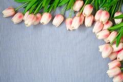 Tulips cor-de-rosa da mola Foto de Stock Royalty Free