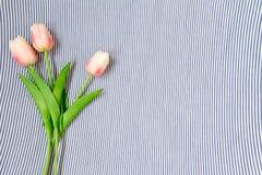Tulips cor-de-rosa da mola Foto de Stock
