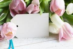 Tulips cor-de-rosa e brancos Fotos de Stock Royalty Free