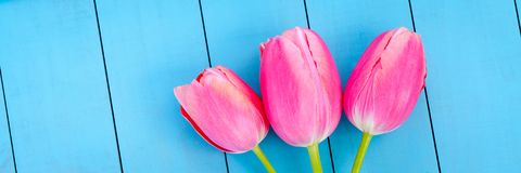 Tulips cor-de-rosa frescos imagens de stock royalty free