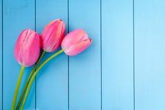 Tulips cor-de-rosa frescos imagens de stock
