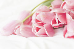 Tulips cor-de-rosa no fundo branco Imagens de Stock Royalty Free