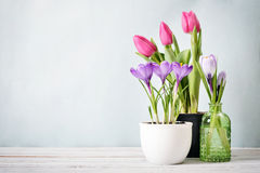 Tulips and crocus Royalty Free Stock Photography