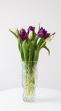 Tulips in crystal vase Royalty Free Stock Images