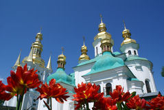 Tulips and cupolas. Red tulips and golden cupolas of church in Kiev Stock Images